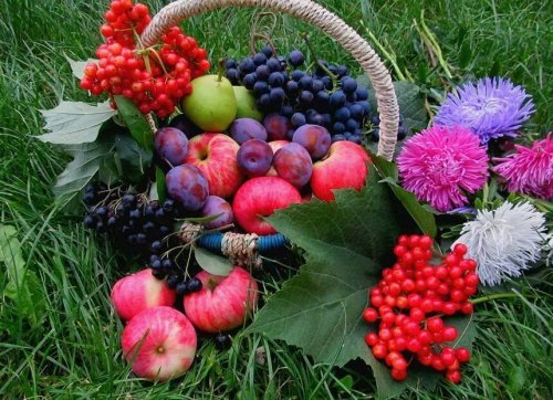 фрукты рябина калина виноград