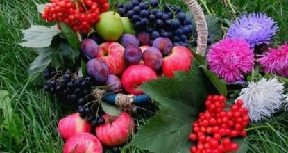 8 полезных для здоровья природных напитков